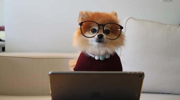 customer service dog