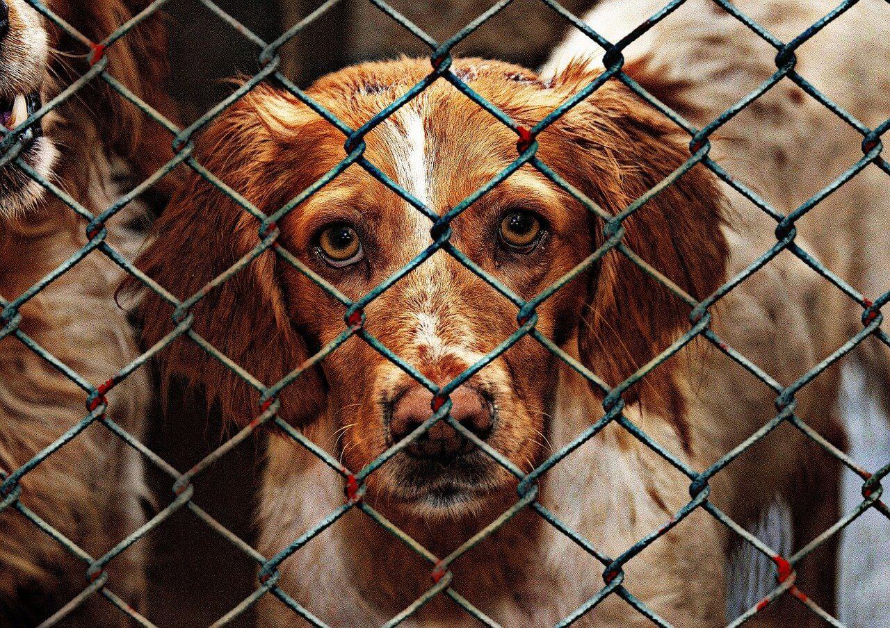 animal shelter homelessness
